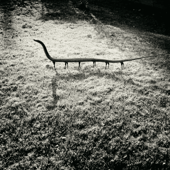 """Fauna"", Solenoglypha Polipodida, 1985 ©Joan Fontcuberta."