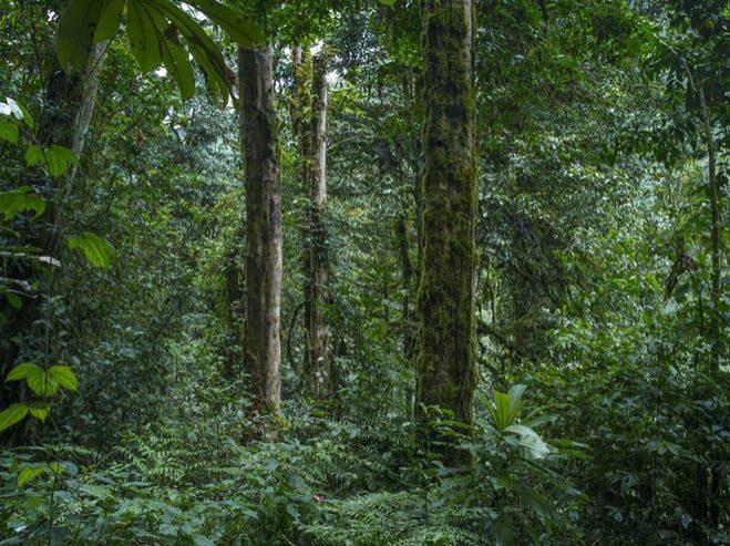 Sans titre, forêt primaire de Nyungwe, série Absences, Rwanda, 2013. © Alexis Cordesse. Courtesy Les Douches La Galerie.