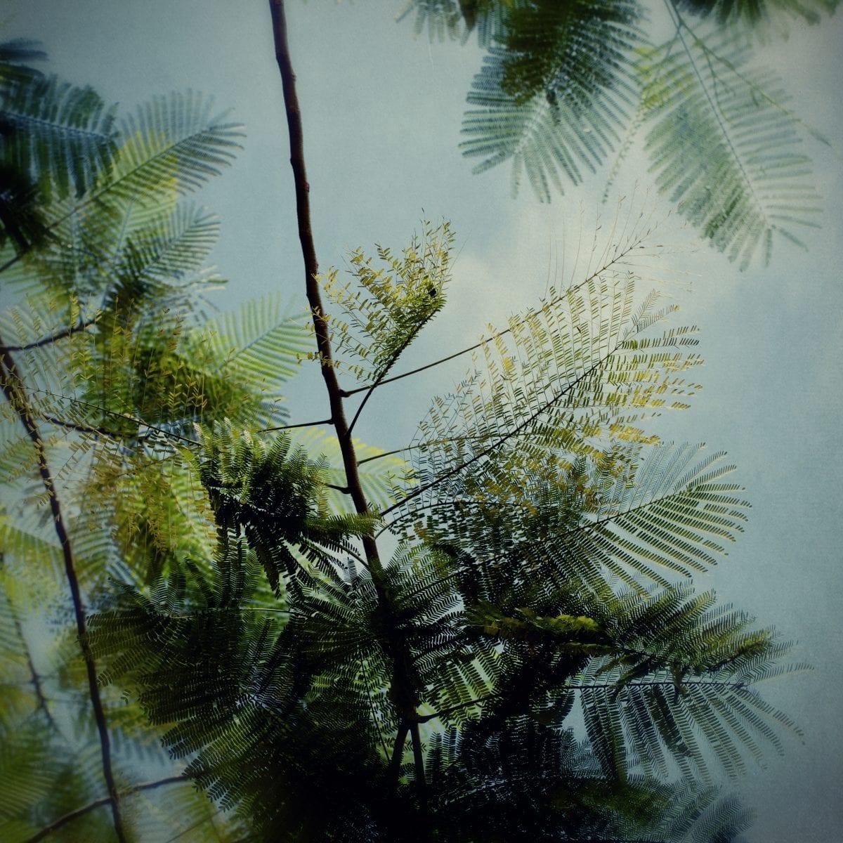 Trees7_Adeline Spengler