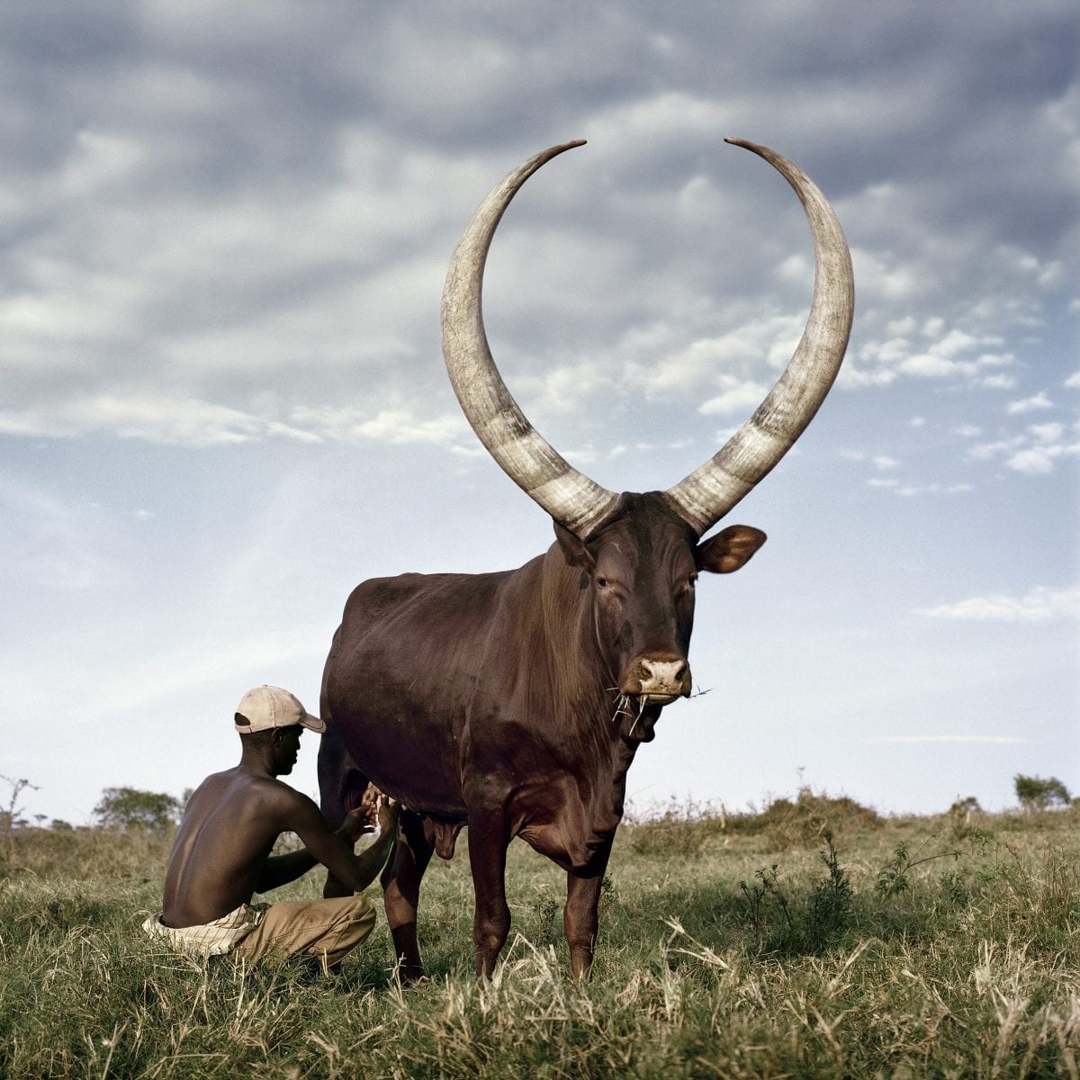 Daniel Naudé Ankole 3. Outside Mbarara, Kiruhura district, Uganda, 2012, 2012. Stevenson