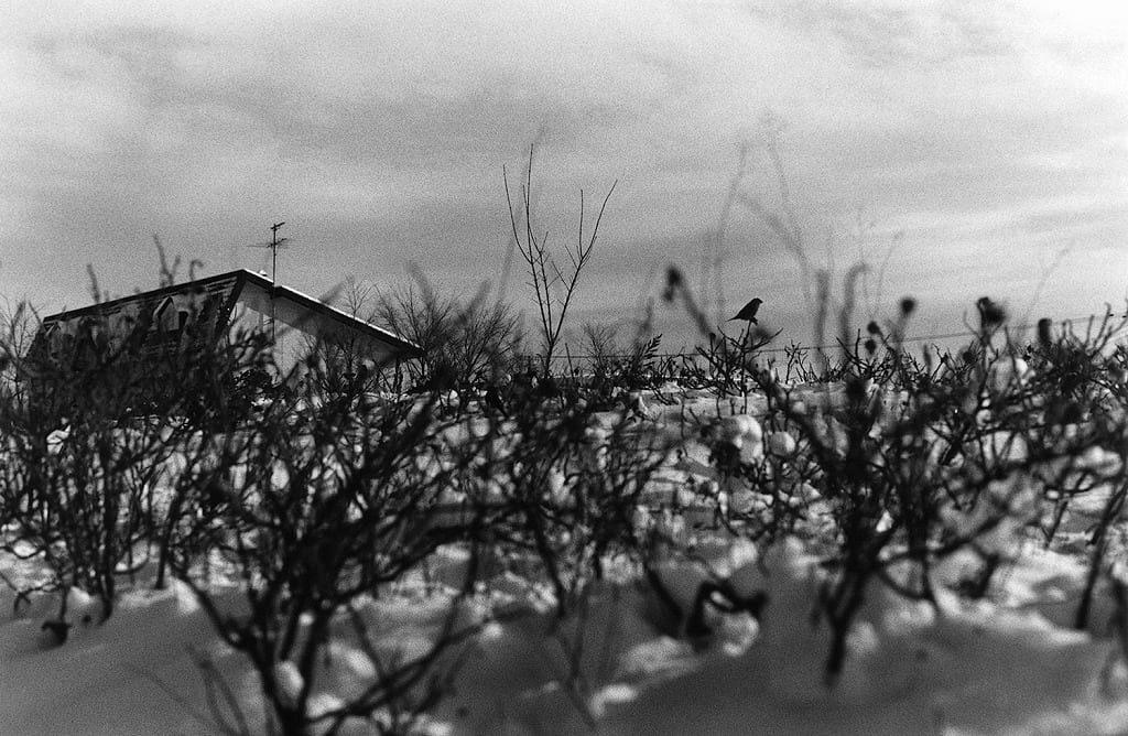 © Hiroki Matsui.