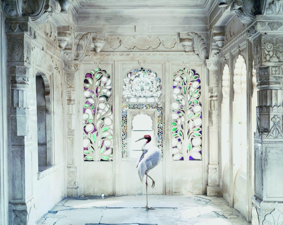 Karen Knorr A Place Like Amravati, Udaipur City Palace (Sarus Crane), Udaipur. Tasveer