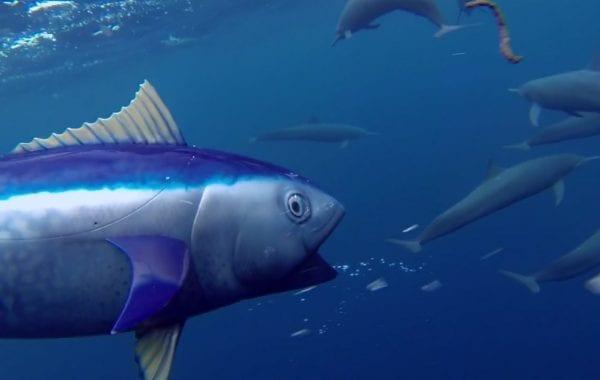 Fisheye Magazine | Comment les spy cams de la BBC photographient les animaux