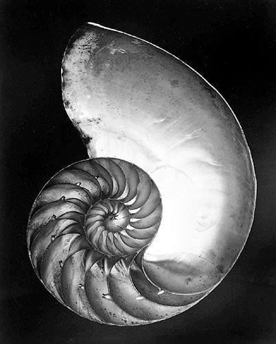 shell-weston
