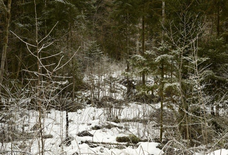 ZDR__Fore_t_d_hivers._Lieu_dit_Les_galcie_res__en_direction_du_lac_de_Sylans-733x500
