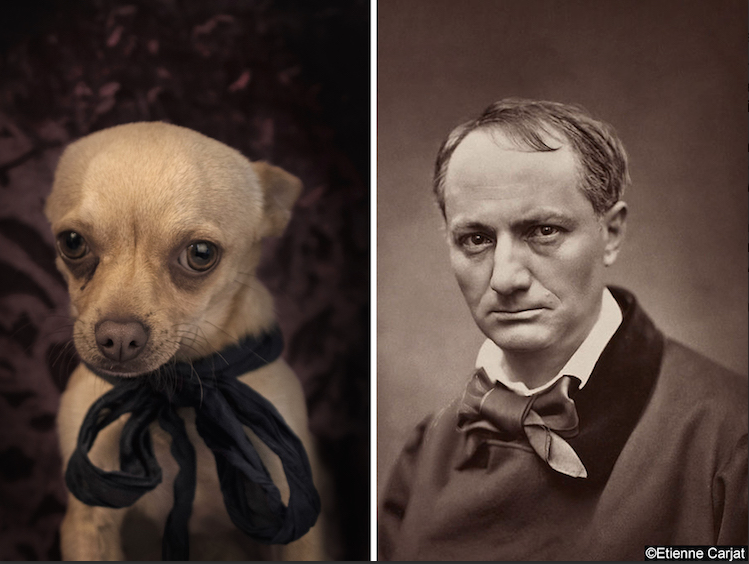 Fisheye Magazine | Il transforme des chiens abandonnés en auteurs célèbres