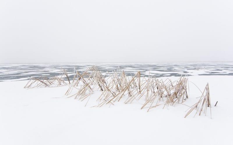 Fisheye Magazine | Winter return