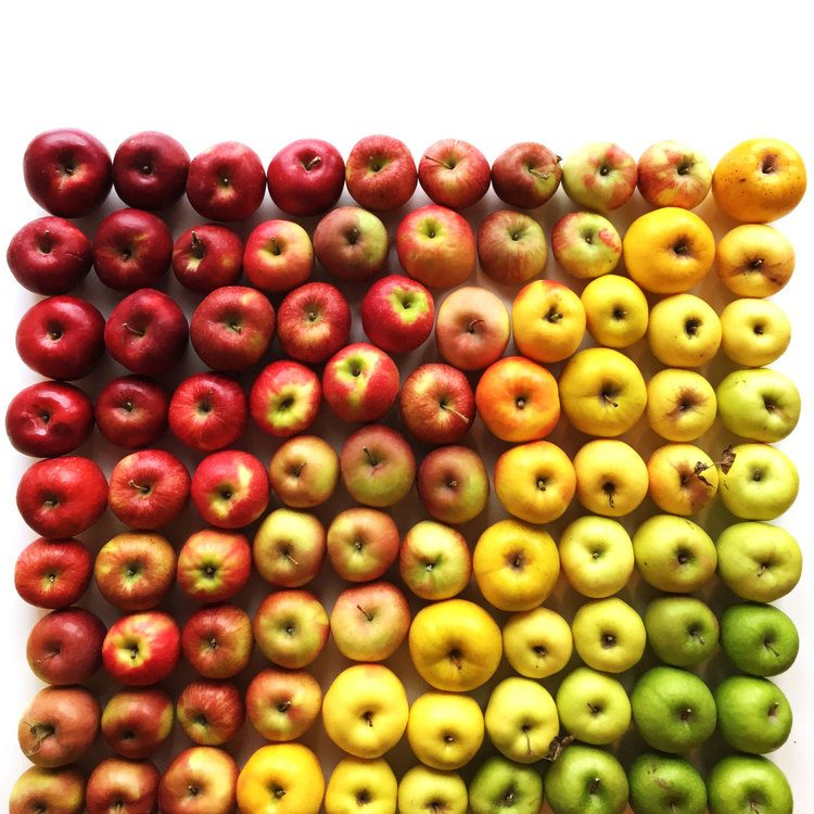 Brittany-Wright-Food-Gradients11-fisheyelemag