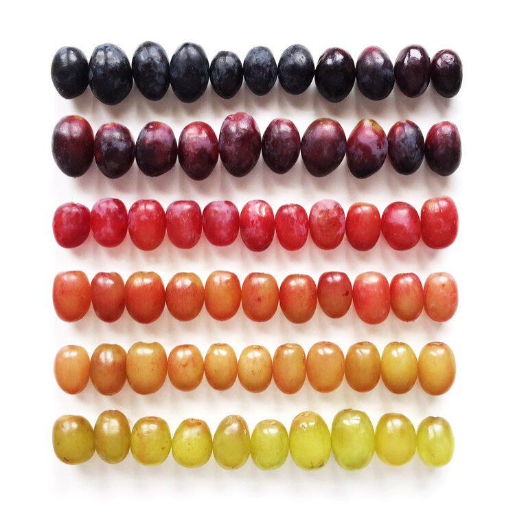 Brittany-Wright-Food-Gradients7-fisheyelemag