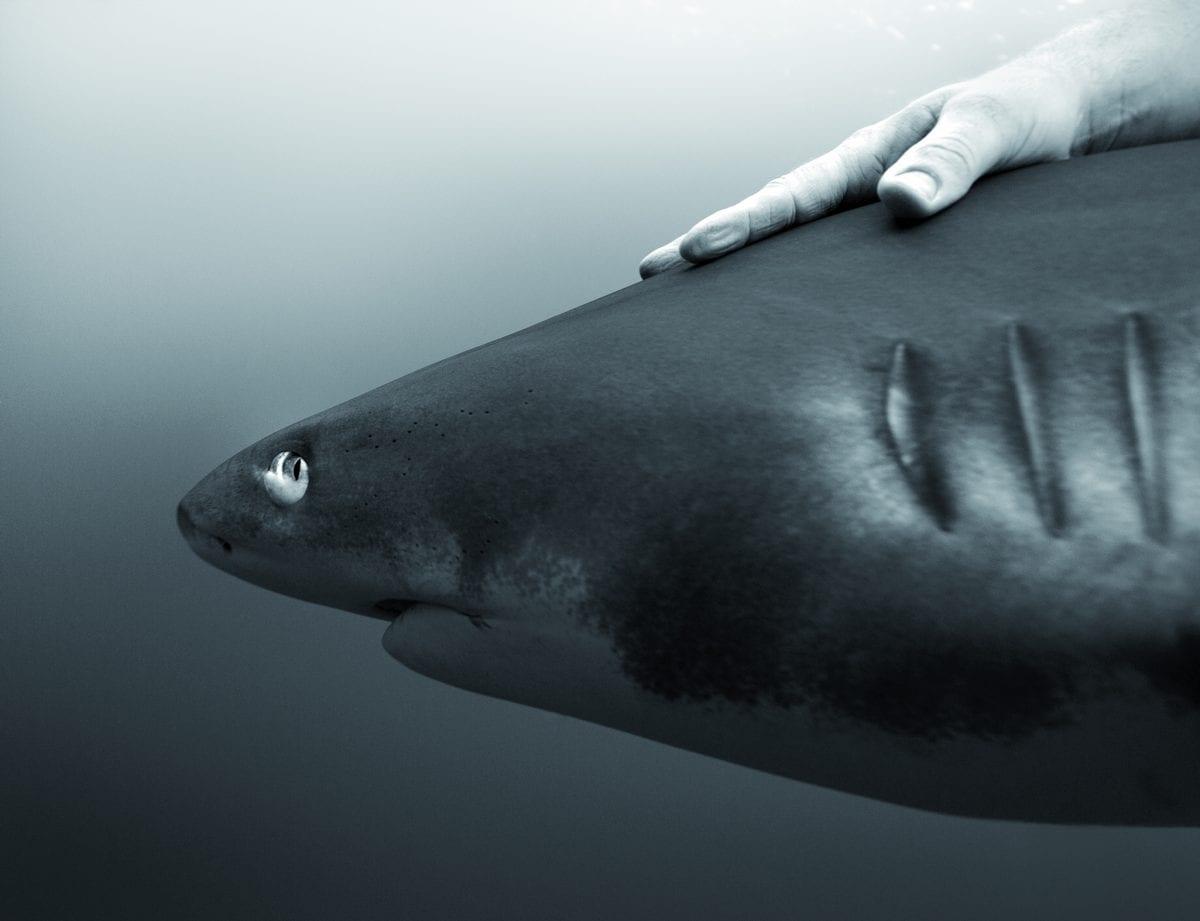 Fisheye Magazine | La mer