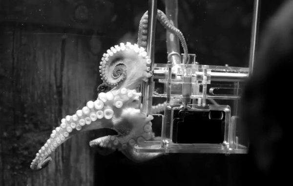 Fisheye Magazine | Rambo, le poulpe photographe