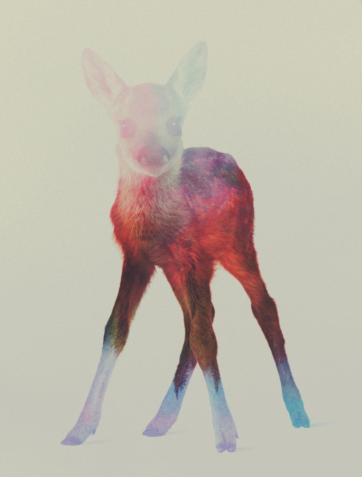 Deer-Fawn-andreas-lie-fisheyelemag