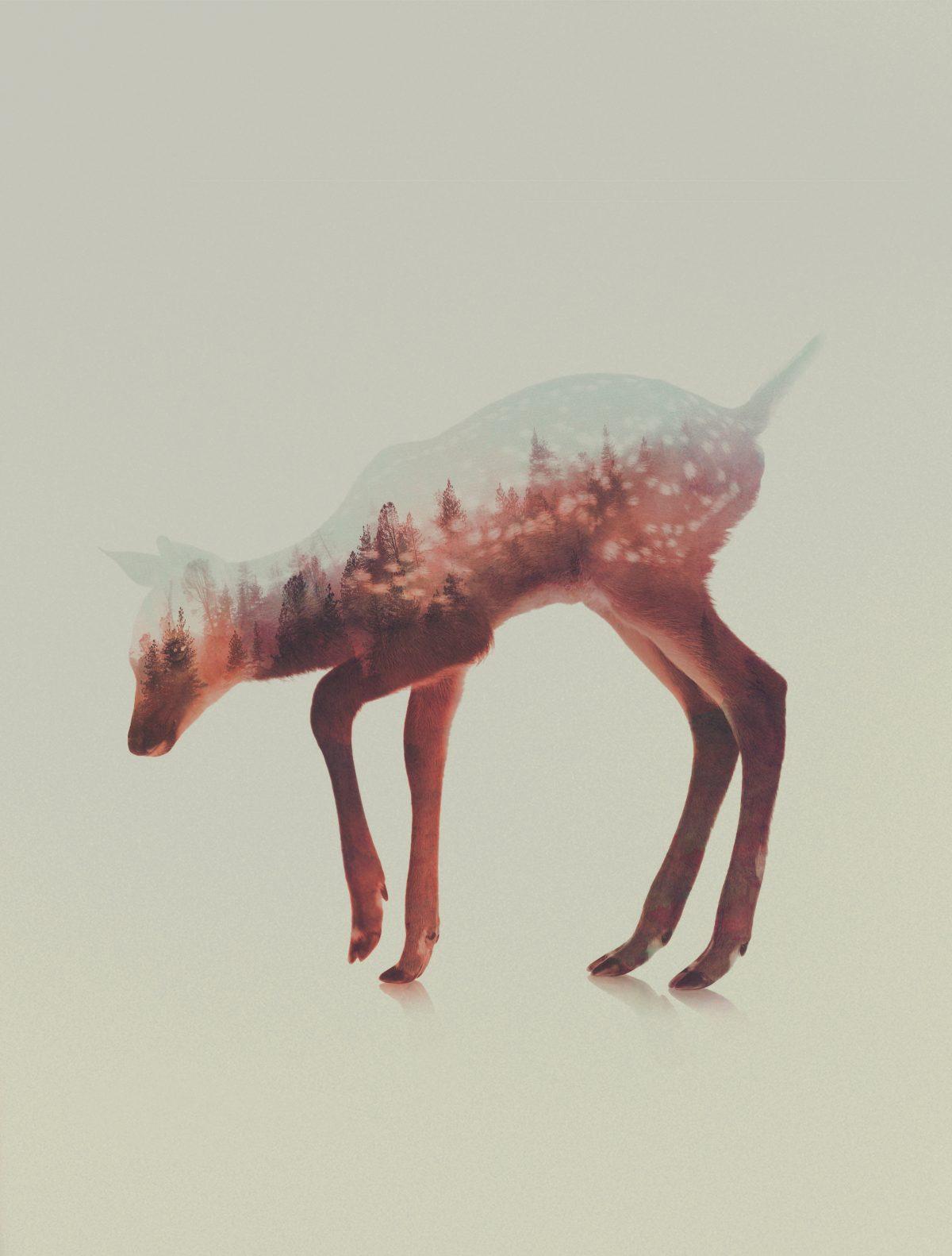 Norwegian-Woods-The-Deer-andreas-lie-fisheyelemag