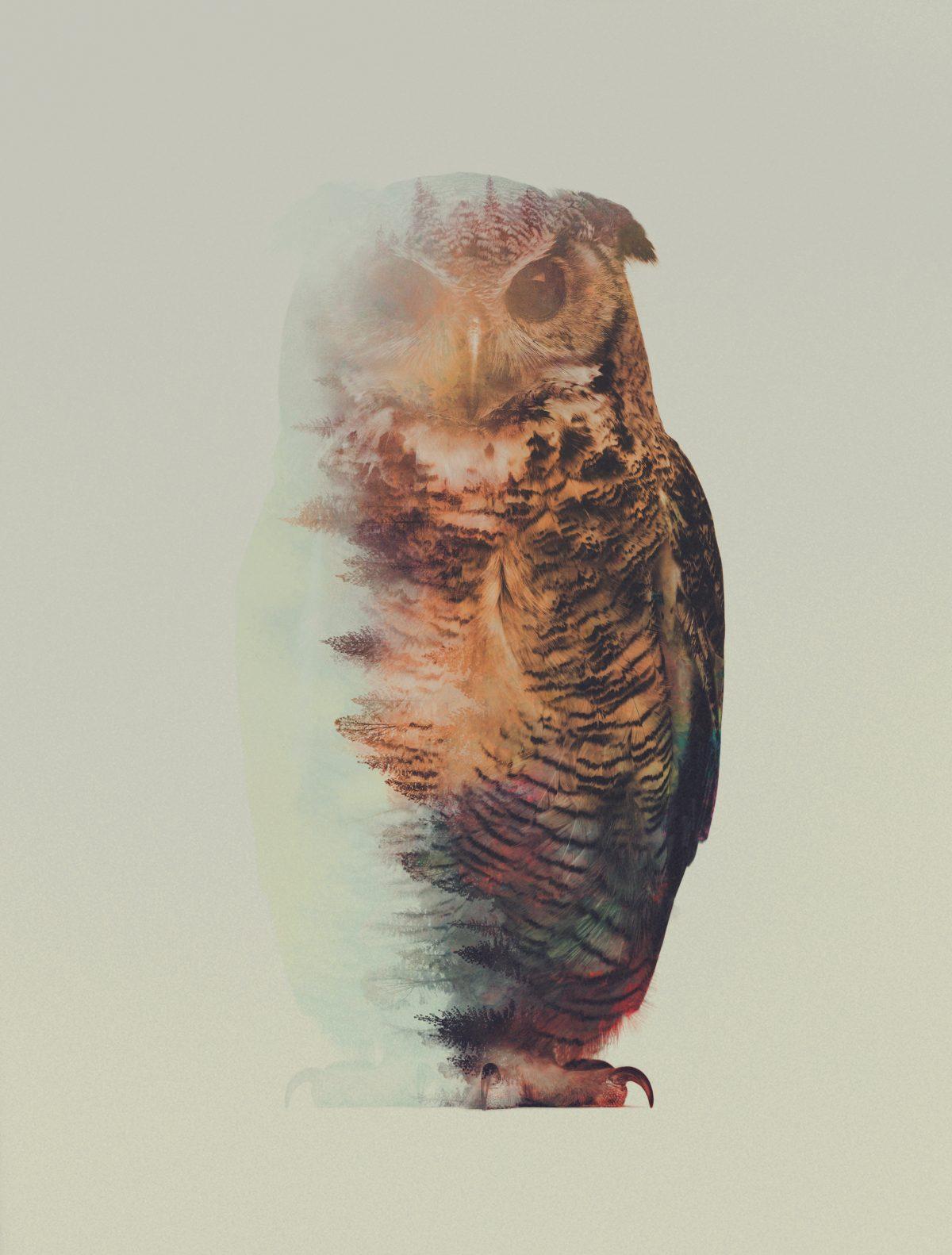 Norwegian-Woods-The-Owl-andreas-lie-fisheyelemag