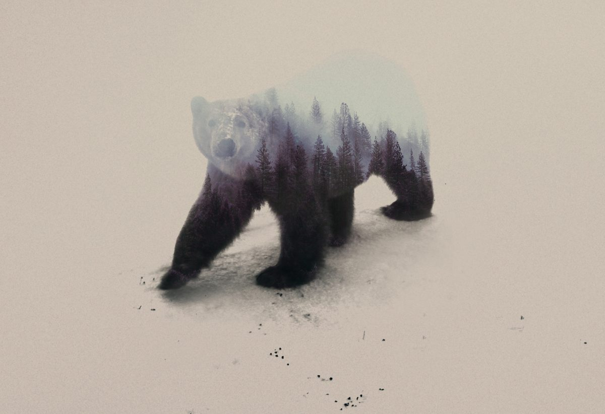 Polar-bear-andreas-lie-fisheyelemag