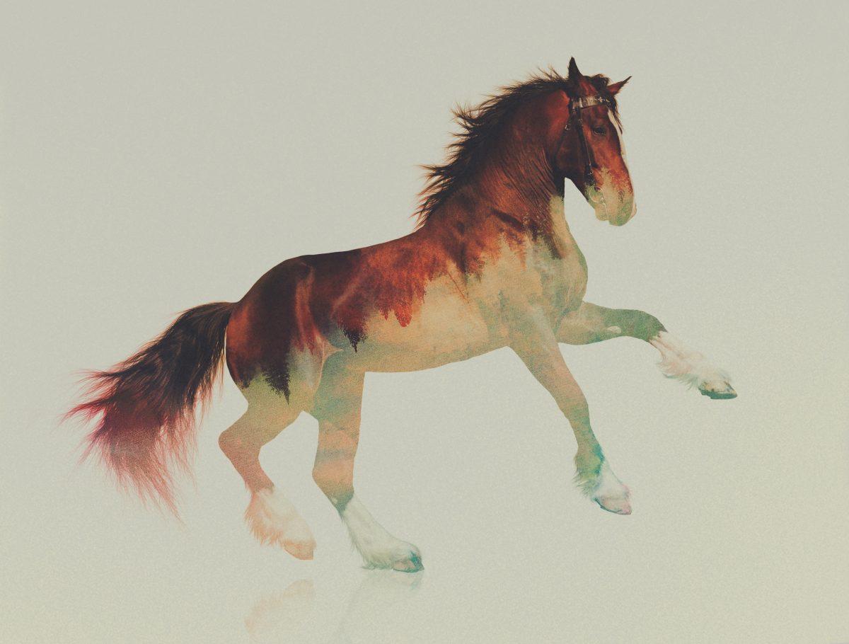 Stallion-andreas-lie-fisheyelemag