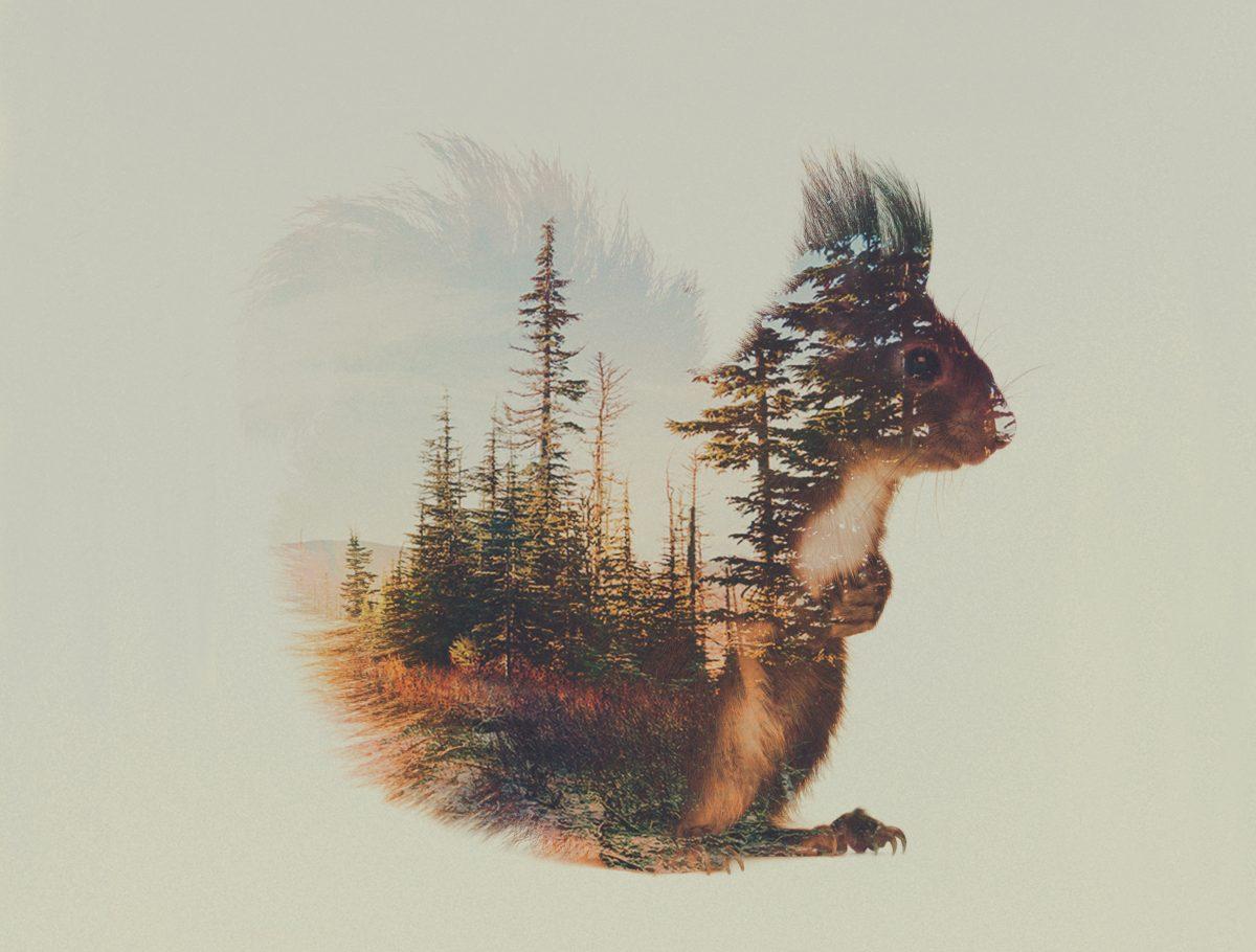 """Photo extraite de la série: """"Norwegian woods"""" / © Andreas Lie"""