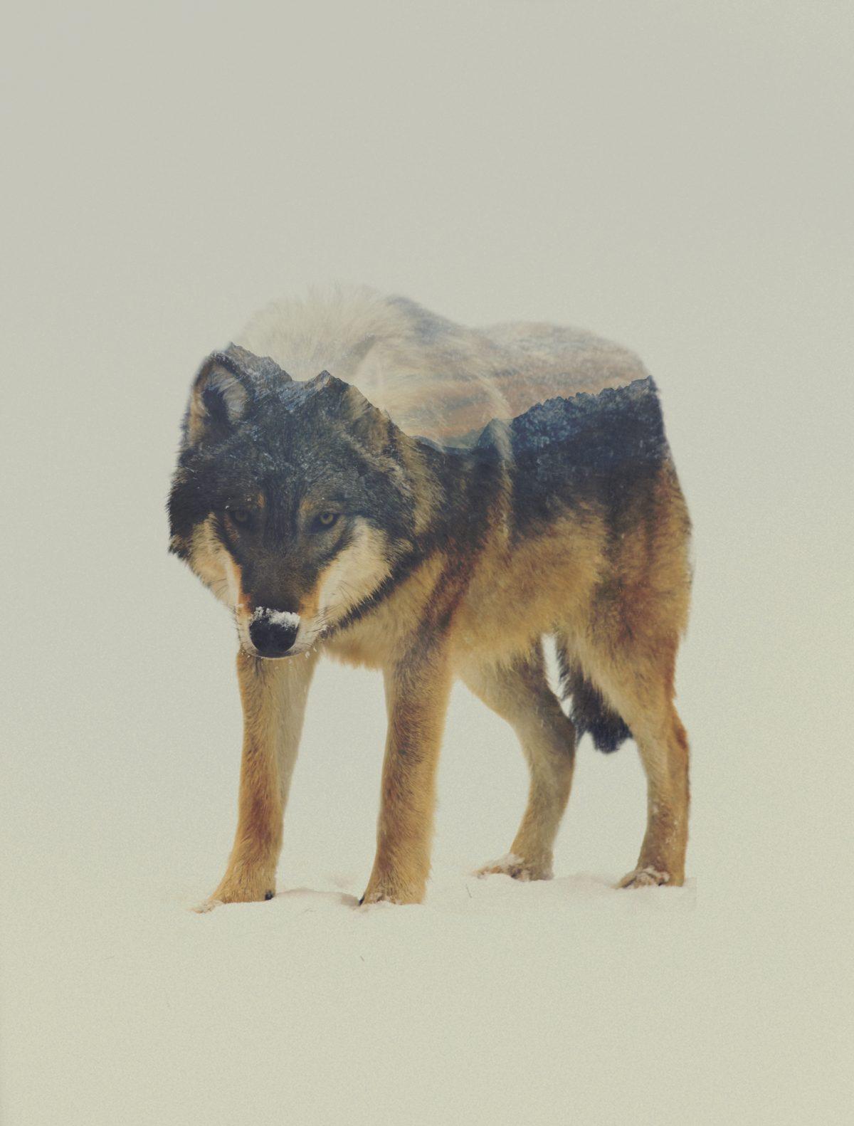 ulf-andreas-lie-fisheyelemag