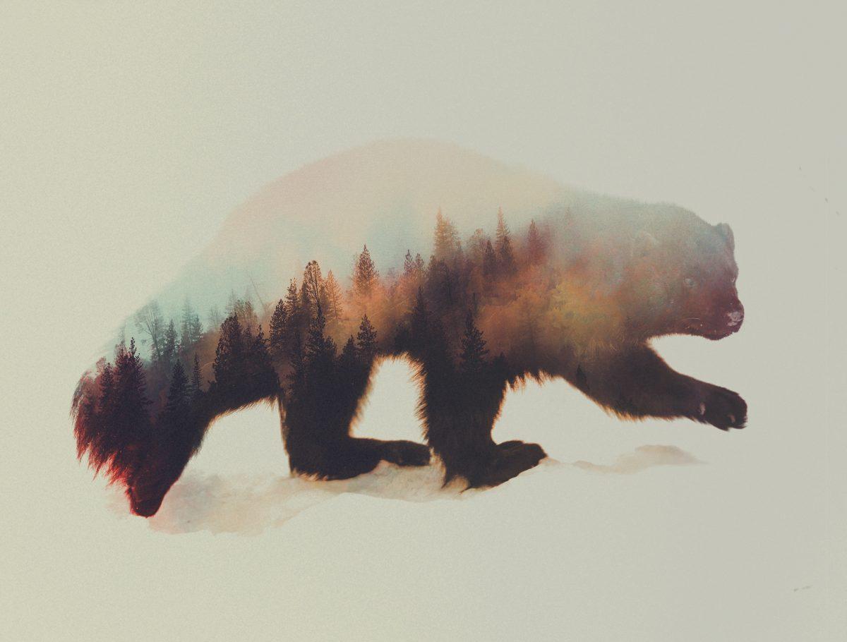 wolverine-andreas-lie-fisheyelemag