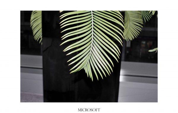 Fisheye Magazine | Une plante, un bureau, une grande marque