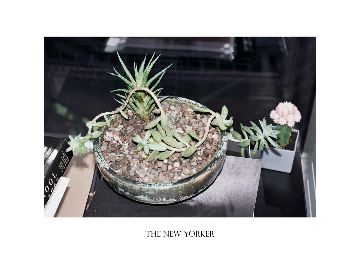 """Photo extraite du livre """"Plants"""" publié aux éditions Pau Wau, © Polly Brown"""