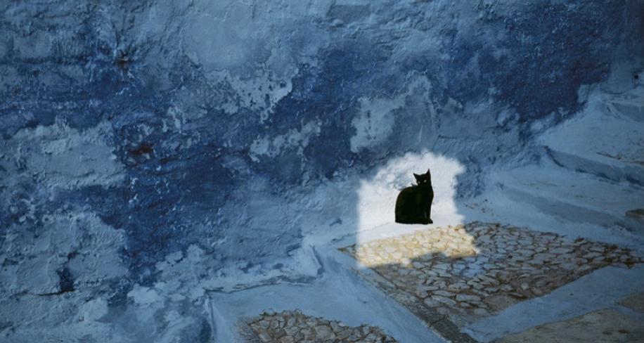 Fisheye Magazine   Le chat et ses photographes