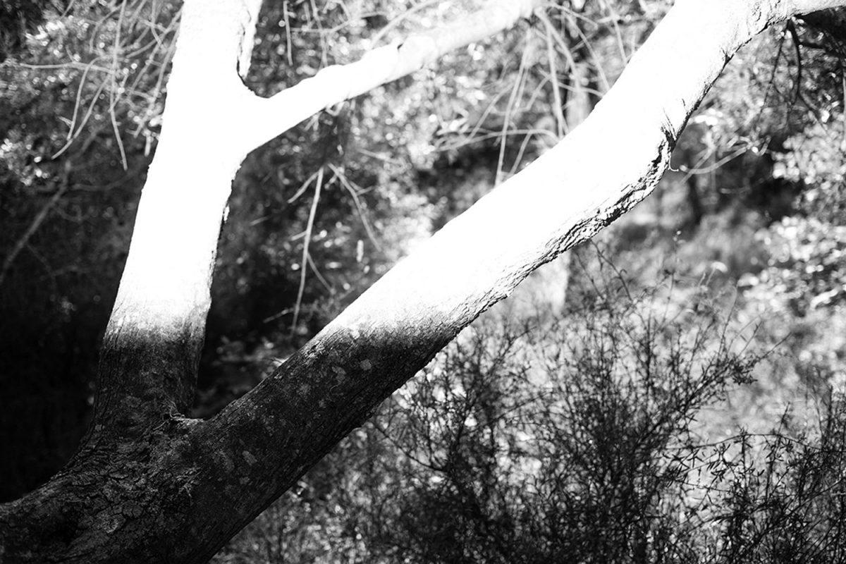 mirroring_giorgos_gavrilakis_008-fisheyelemag