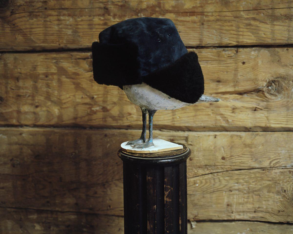 Plasticine seagull sculpture with hat. Bolderaja, 2013