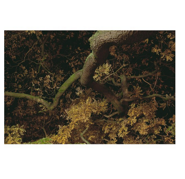 Rickard Grönkvist / Instagram