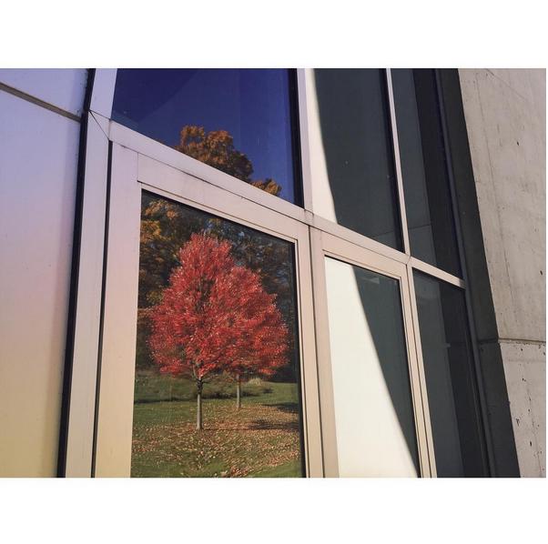 © Trent Davis Bailey / Instagram