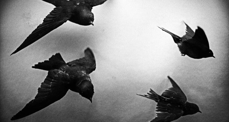 Fisheye Magazine | Topographie à vol de corbeaux