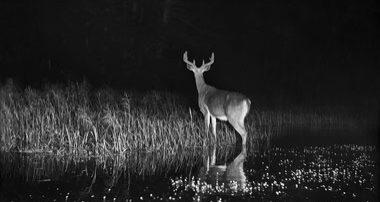 Fisheye Magazine | L'intérieur de la nuit