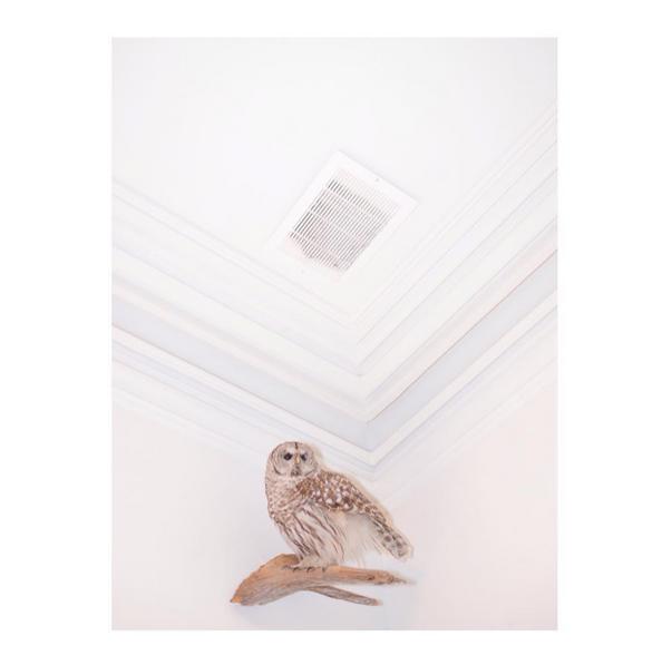 © Shane Lyman / Instagram