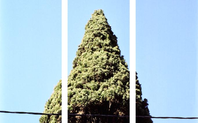 Fisheye Magazine | Le festival de la Photographie de Nice donne carte blanche aux photographes