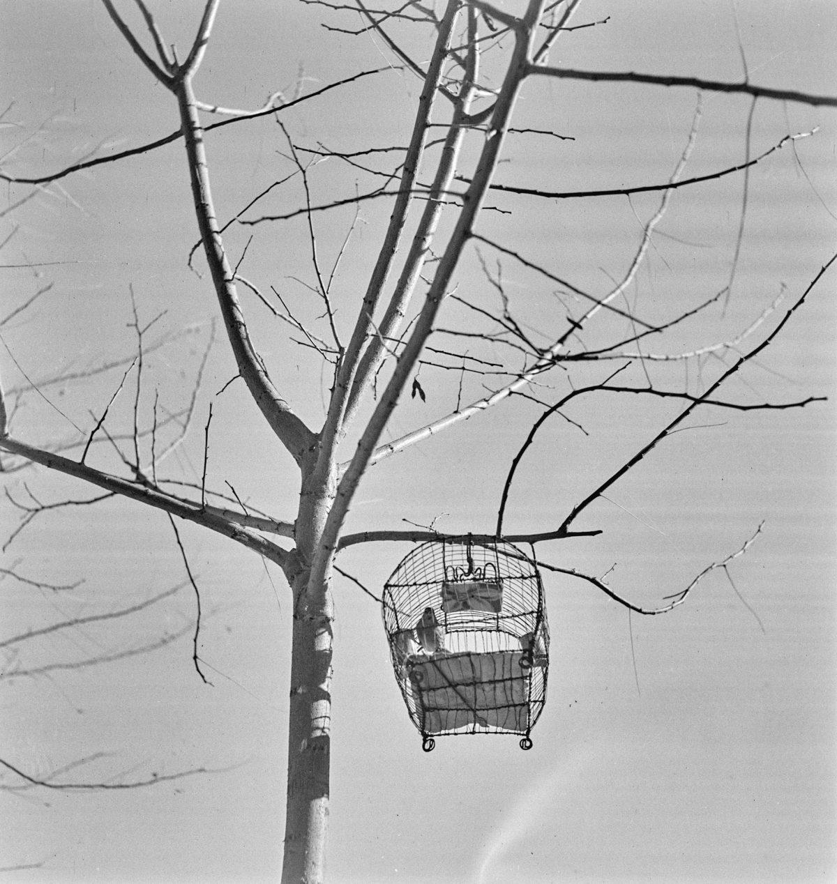 """""""Arbre et cage"""" / © Hélène Hoppenot"""