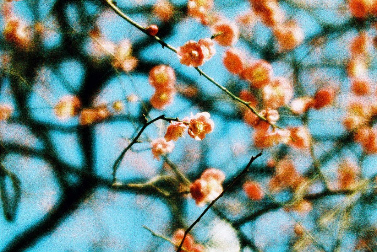 © Kieko Hoshi