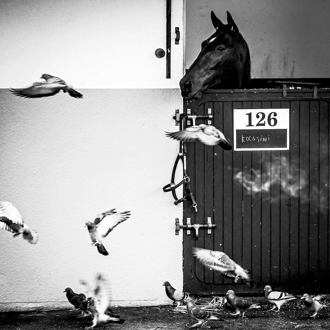 Hippodrome de Vincennes. Décembre 2014, © Bruno Charoy © Festival Sportfolio 2016