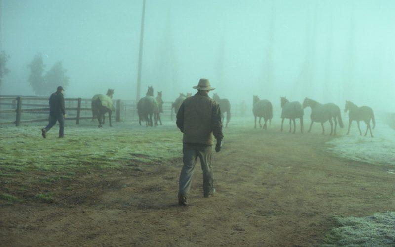 Fisheye Magazine | Murmure à l'oreille des chevaux