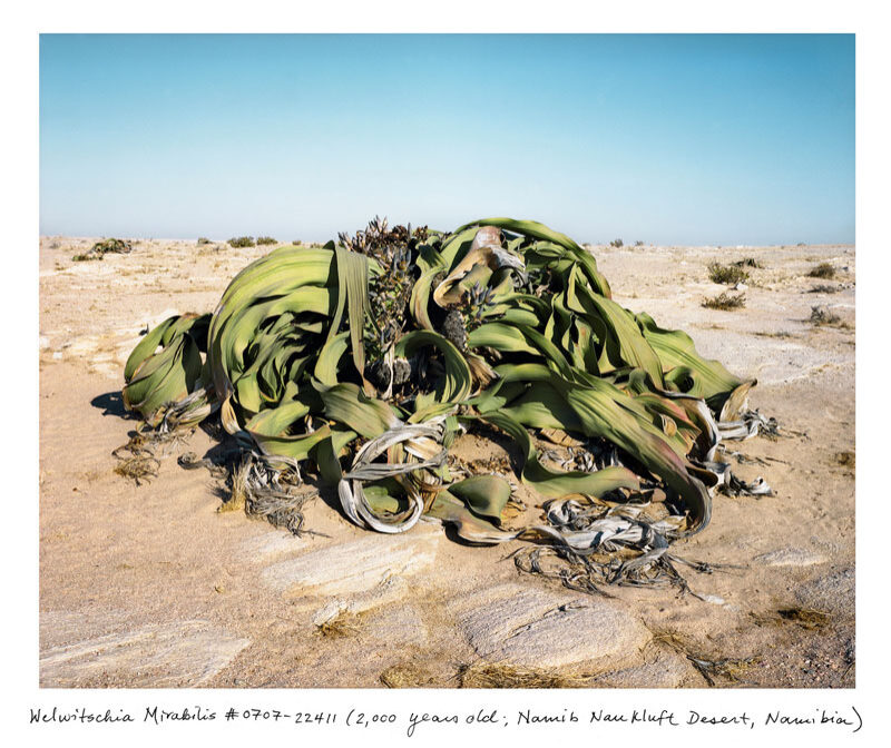 Rachel Sussman_The oldest living things in the world_01