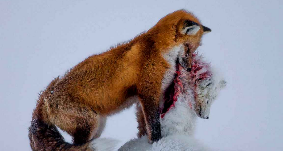 Fisheye Magazine | Wildlife Photographer of the Year