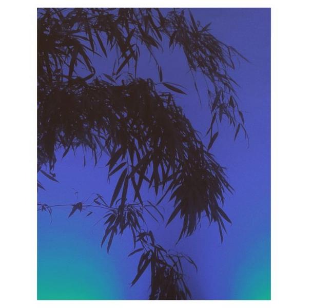 © Helena Ganjalyan / Instagram