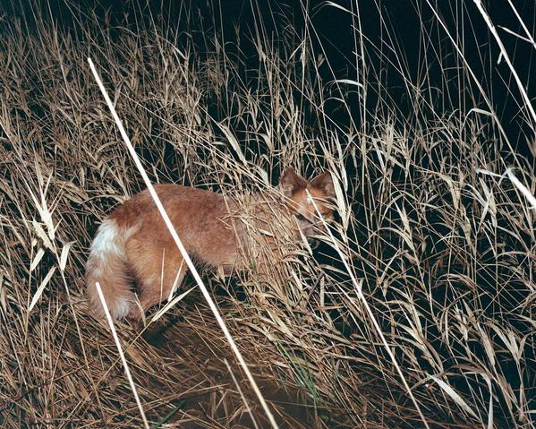 © Nich Hance McElroy / Instagram