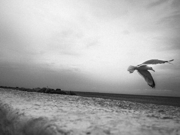 Fisheye Magazine | © Stelios Papadopoulos / Instagram