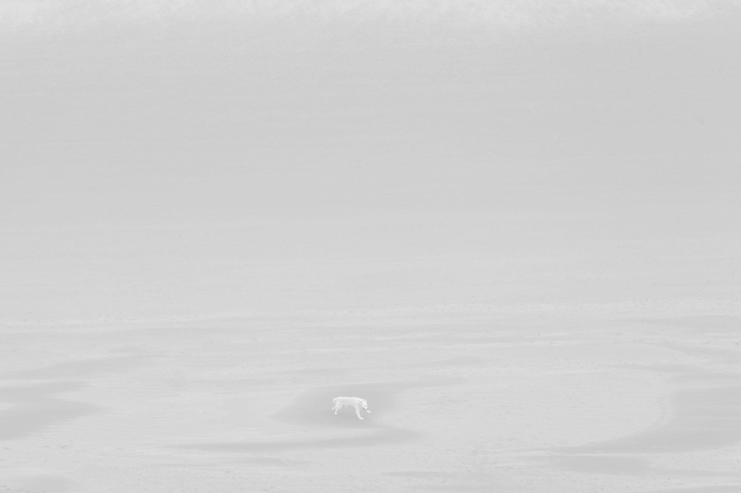 Quatrième prix, © Gérard Staron