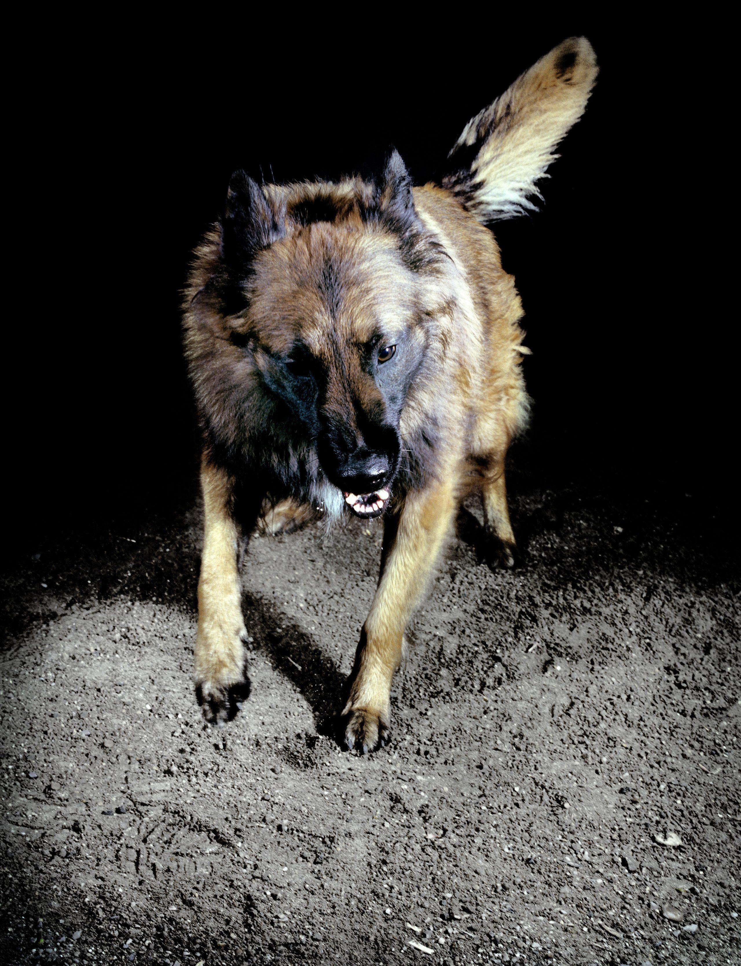 Extrait de la série Les chiens, France, 2010, © Tina Merandon / Signatures
