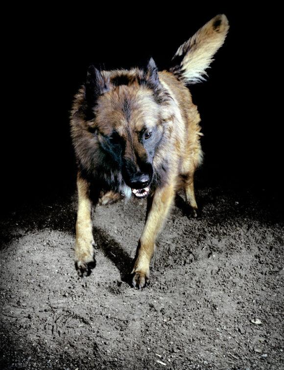 """Extrait de la série """"Les chiens"""", France, 2010, © Tina Merandon / Signatures"""