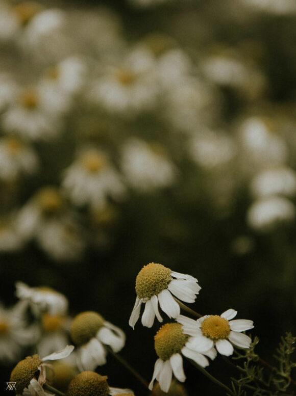© Milie Del