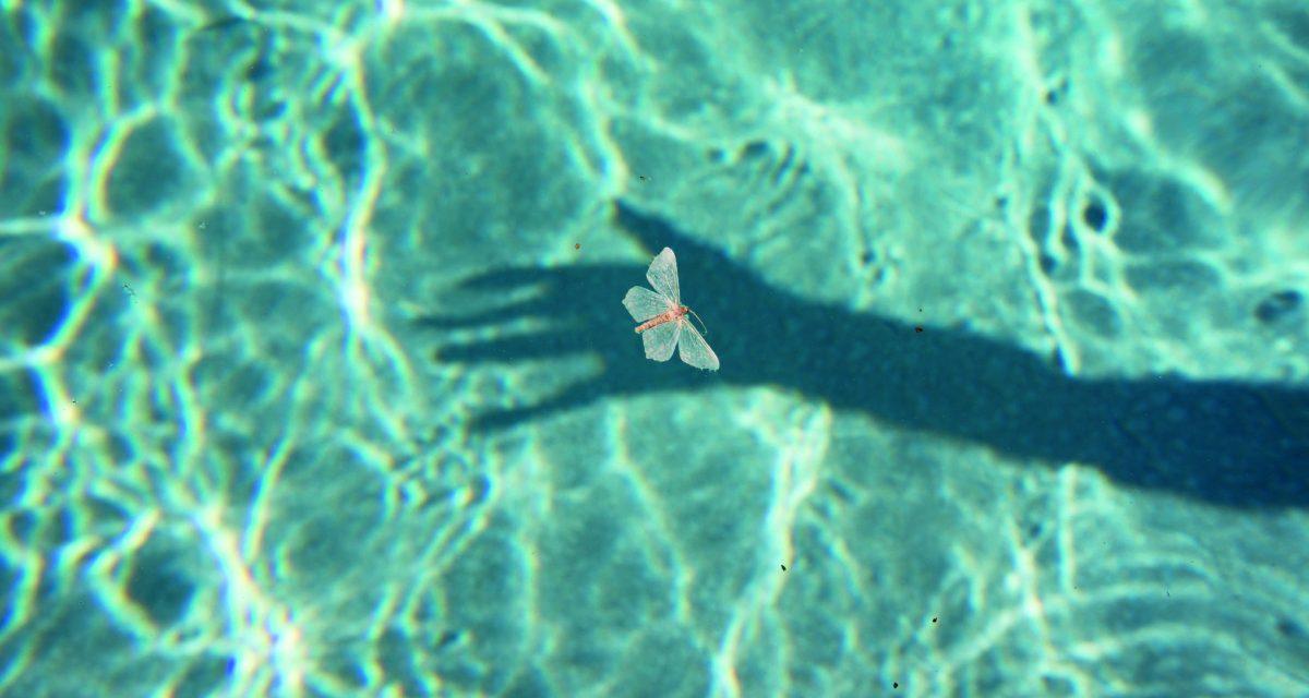 Dead moth floating on pool © Philip Heying