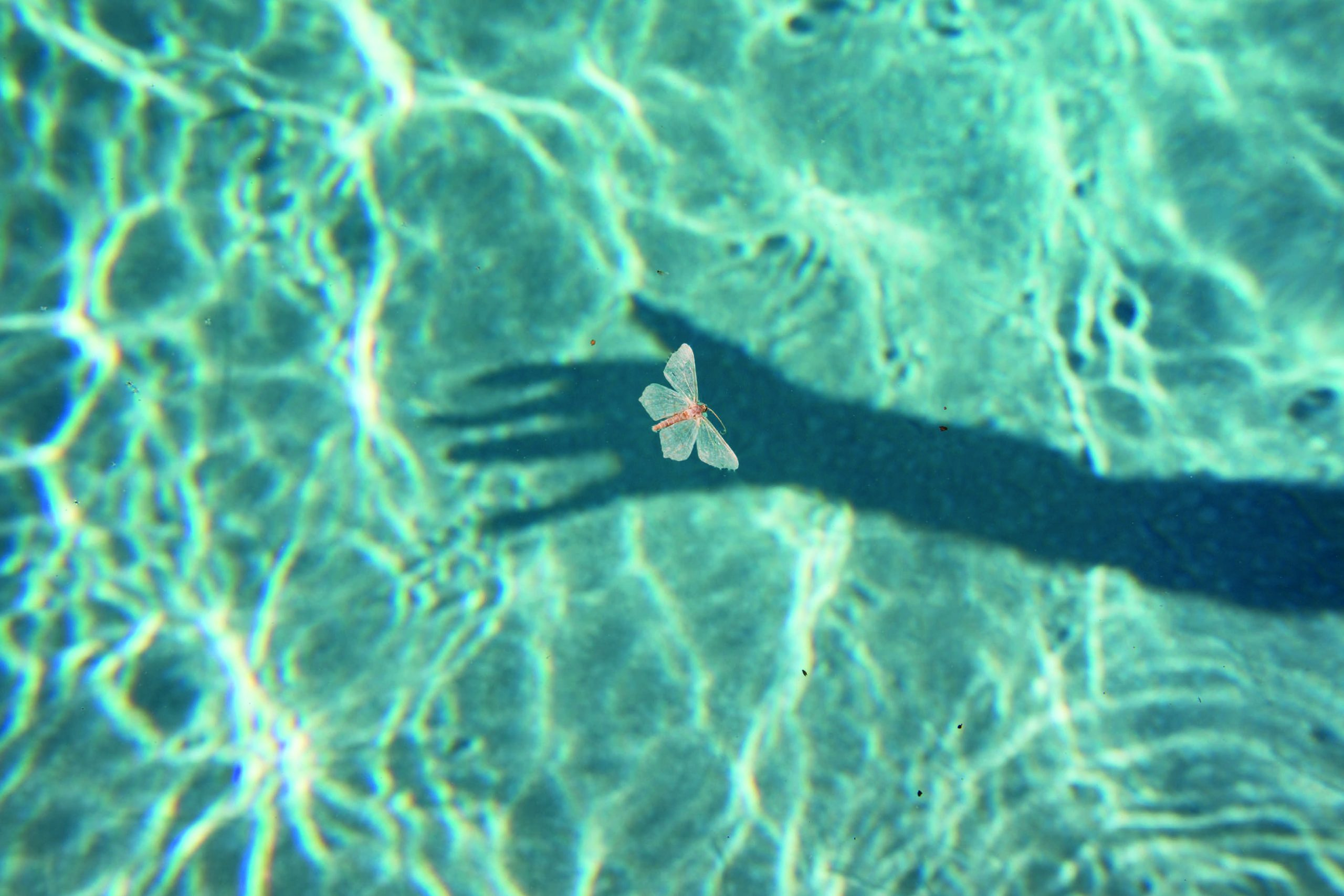 Dead moth floating on pool © Philip Heying