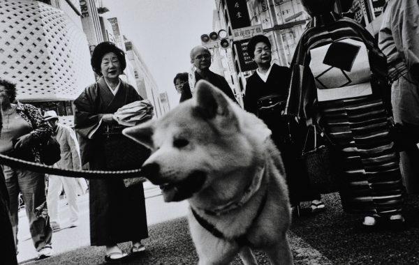 © Keizo Motoda